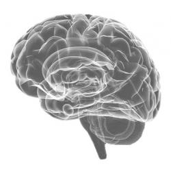Photo of Human Brain